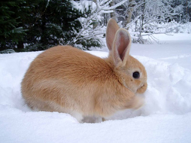 Bunny Plays in the Snow