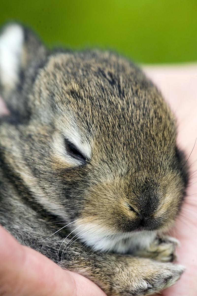 Baby Bunny Closeup
