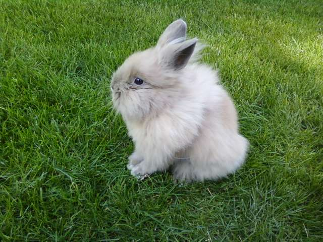 Fluffy Bunny Enjoys the Sunshine