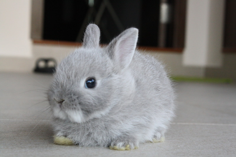 Roundest Bunny Ever