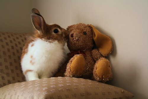 Bunny Has a Friend
