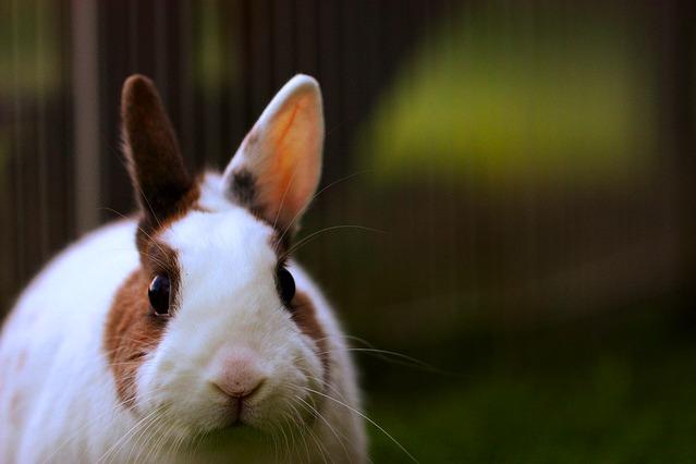 Bunny Stare
