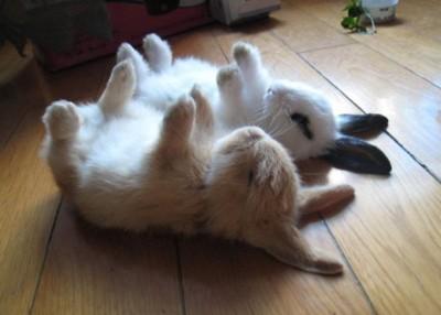 Hypnotized Bunnies