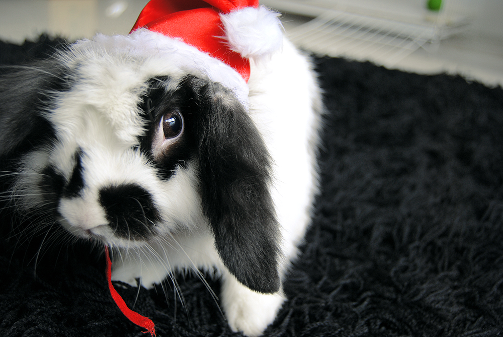One More Christmas Bun