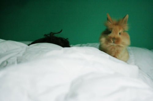 Bunny Wants You to Wake Up Already