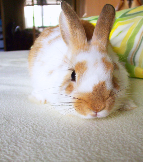 Bunny Noses Up to Camera