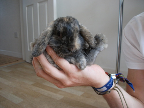 A Handful of Bunny