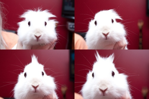 Four Times the Bunny Cuteness