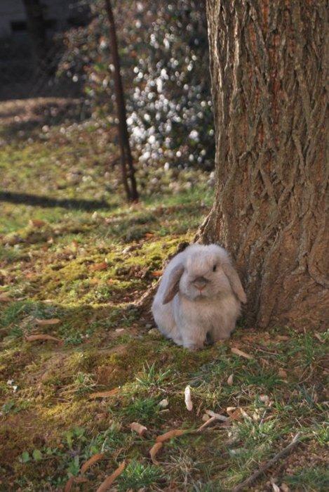 Bunny in the Springtime