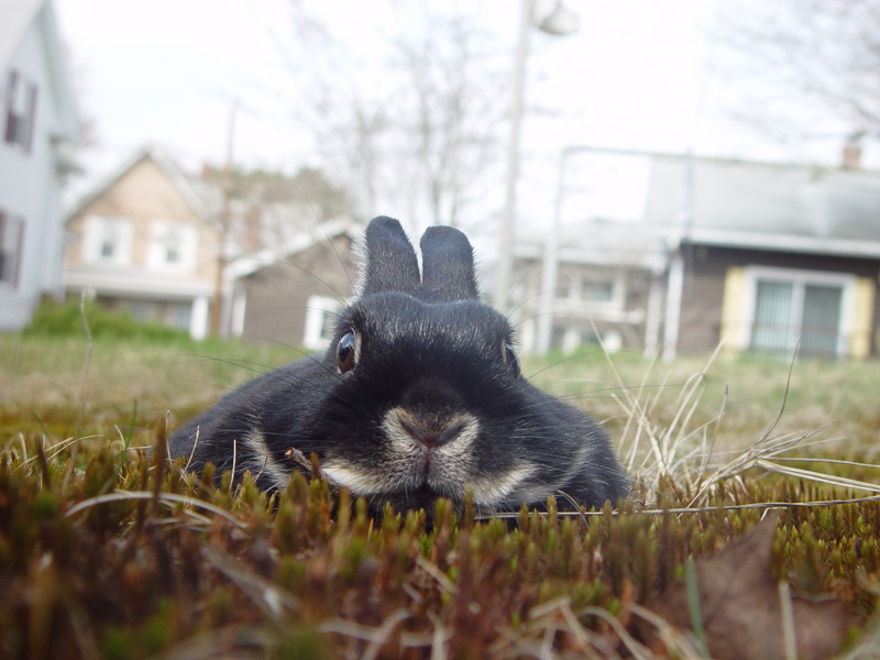 Bunny Likes to Hide in the Grass