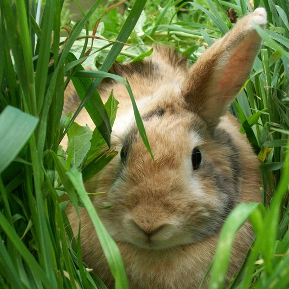 Bunny Relaxes in the Tall Grass