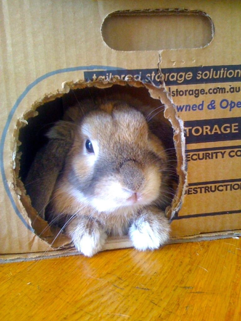 Bunny Relaxes in Her Box