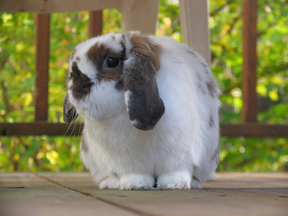 Bunny Reluctantly Poses