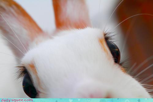 Bunny Has Nice Lashes
