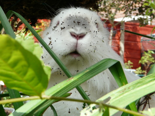 Bunny's Been in the Plants!