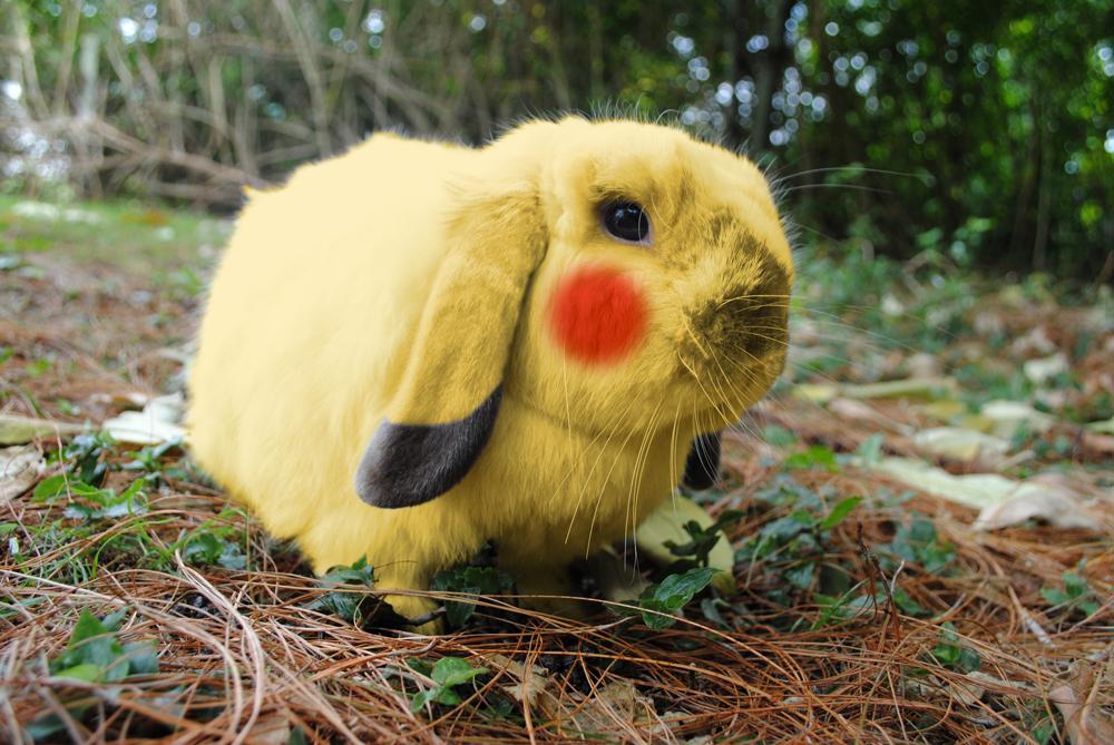 Pikachu Bunny!