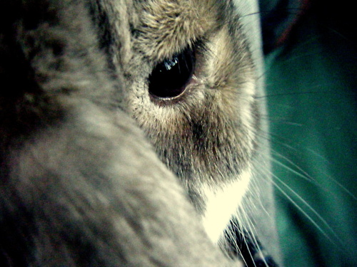 Bunny Says Don't Think I Can't See You with That Camera!