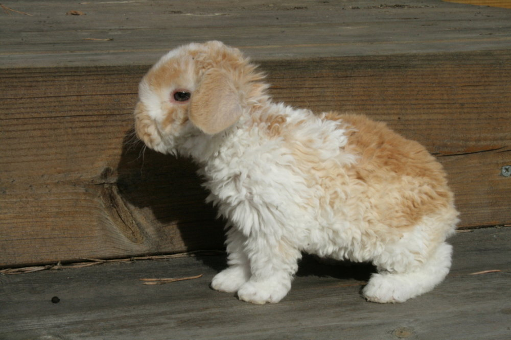 Bunny Has a Curly Coat