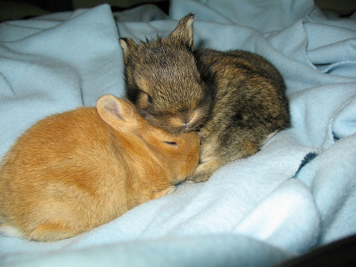 Cuddle Bunnies