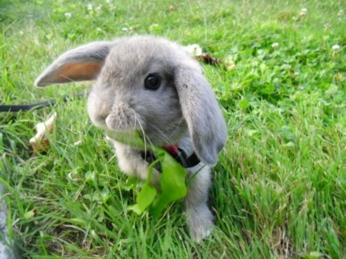 Bunny Enjoys Spring with a Walk in the Park