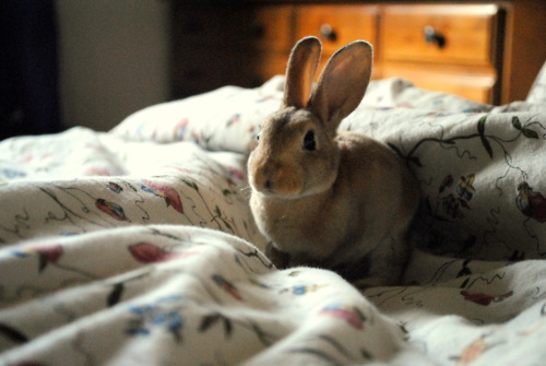 Bunny Has Successfully Woken Up Her Human