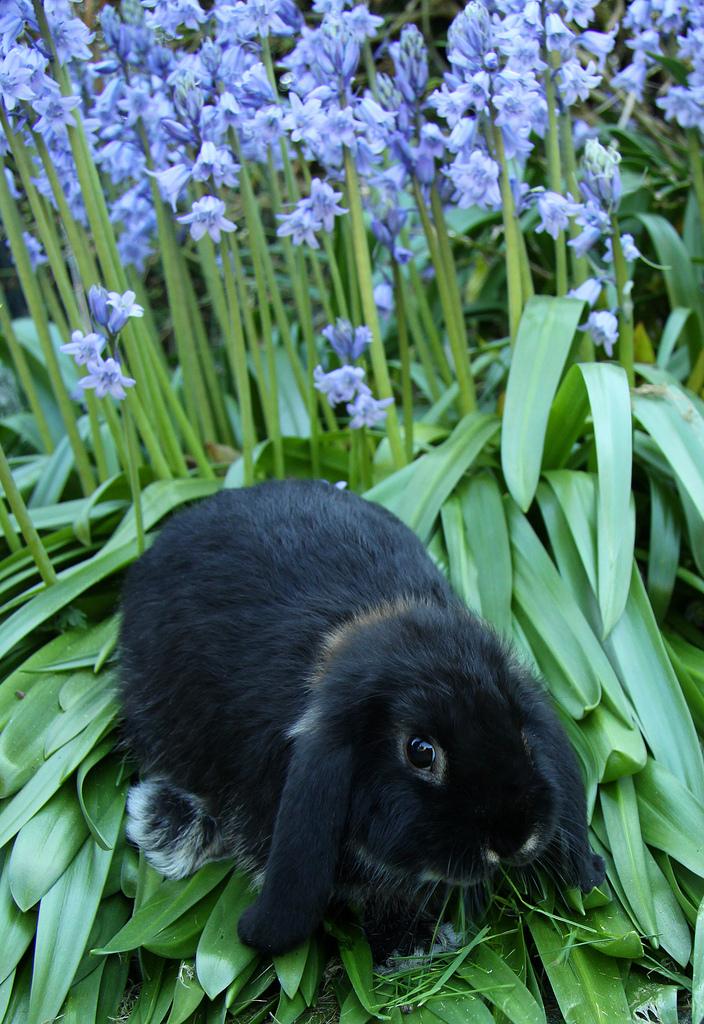 Bunny among the Bluebells