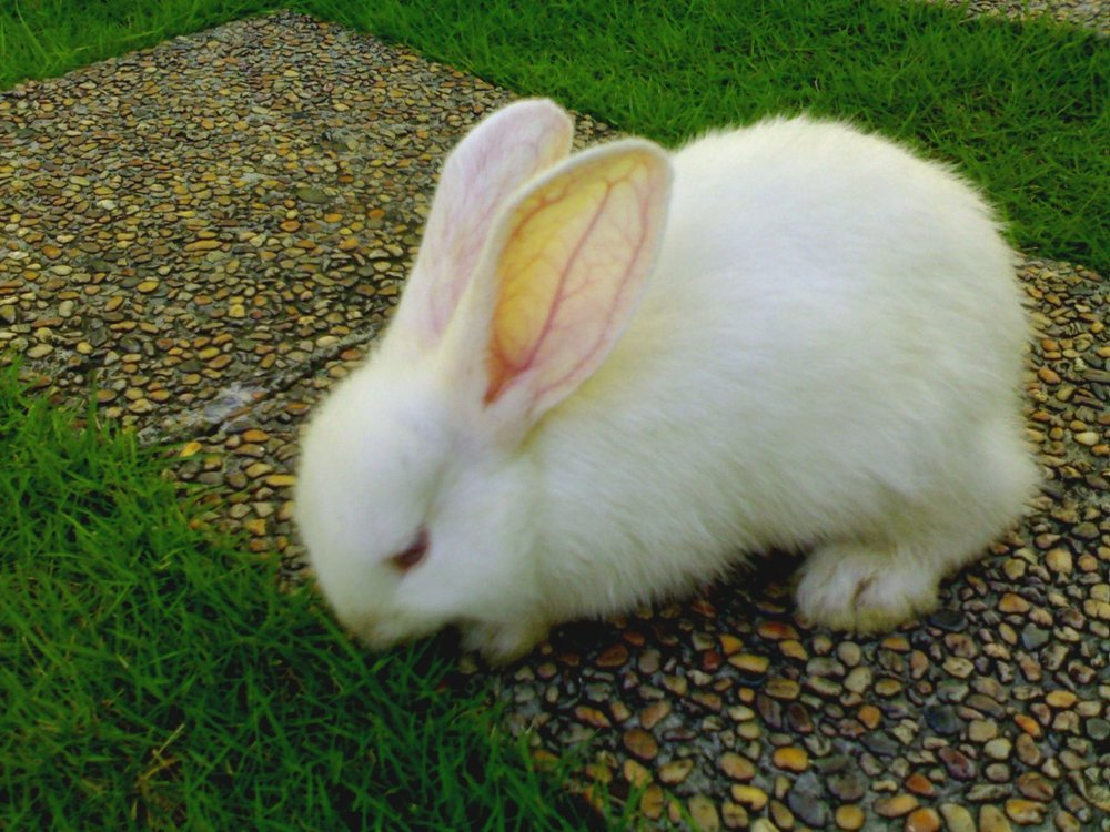 Bunny Samples Some Yummy Grass