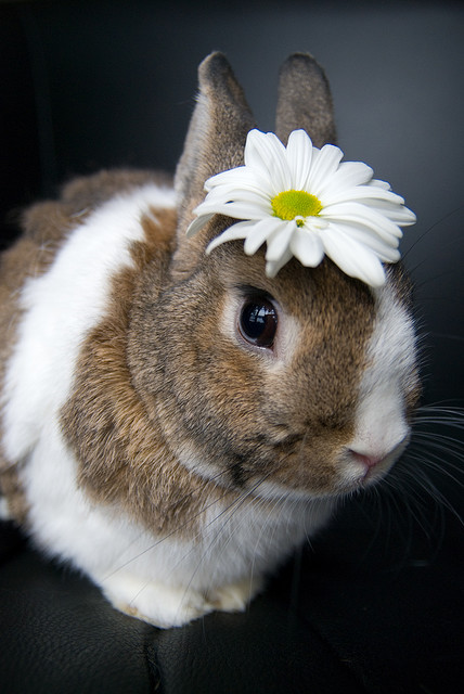 Bunny Has a Flower on Her Head; Your Argument Is Invalid