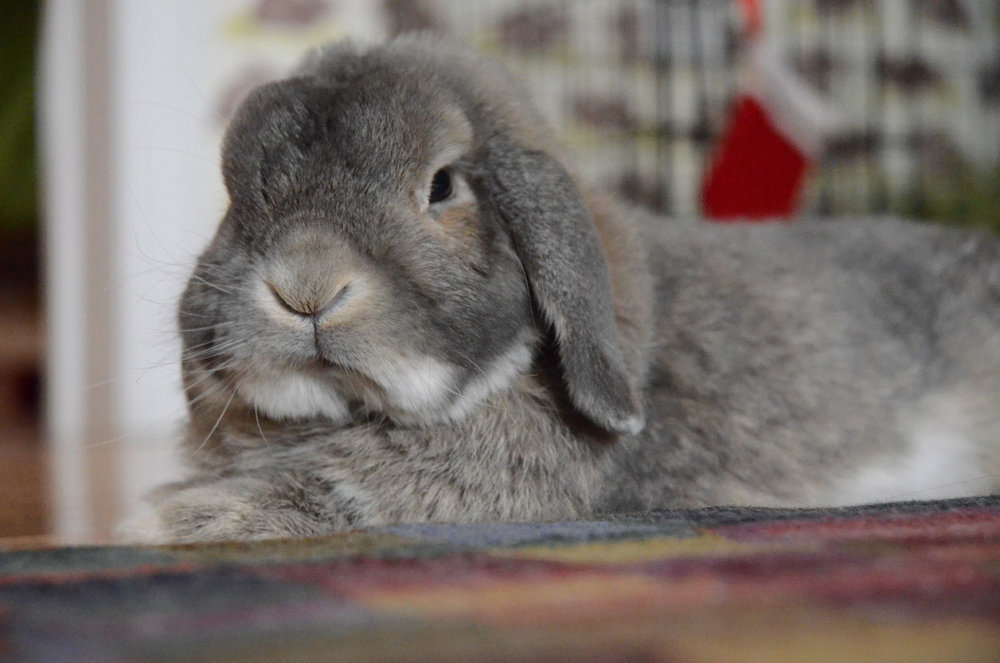 Disapproving Bunny Isn't in the Mood for a Photoshoot Right Now
