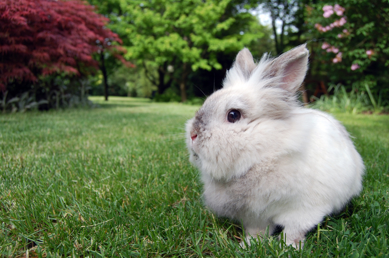 Bunny Contemplates Nature