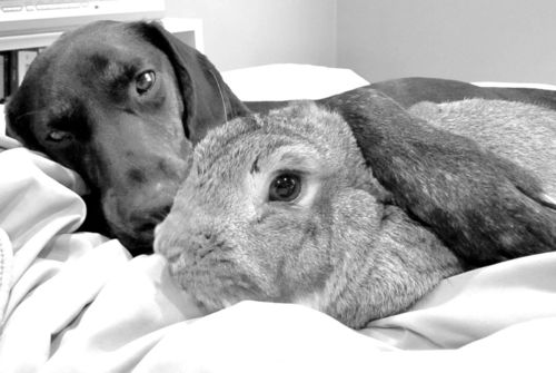 Bunny Cuddles with Her Canine Pal