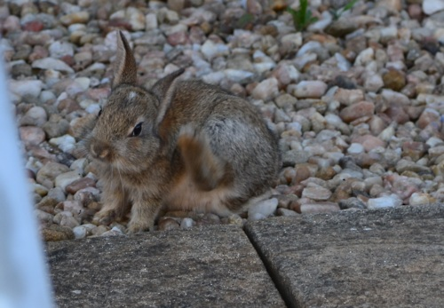 Bunny Has Succeeded In Taking Over the Garden