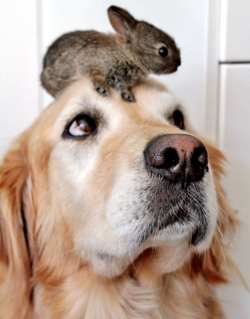Bunny Declares Dog's Head His Seat of Choice
