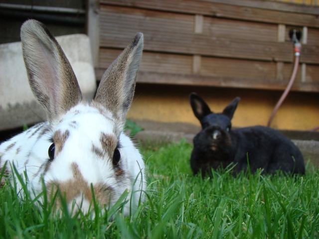 Bunnies Lie in Wait