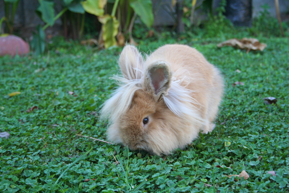 Bunny Enjoys the Summer Garden