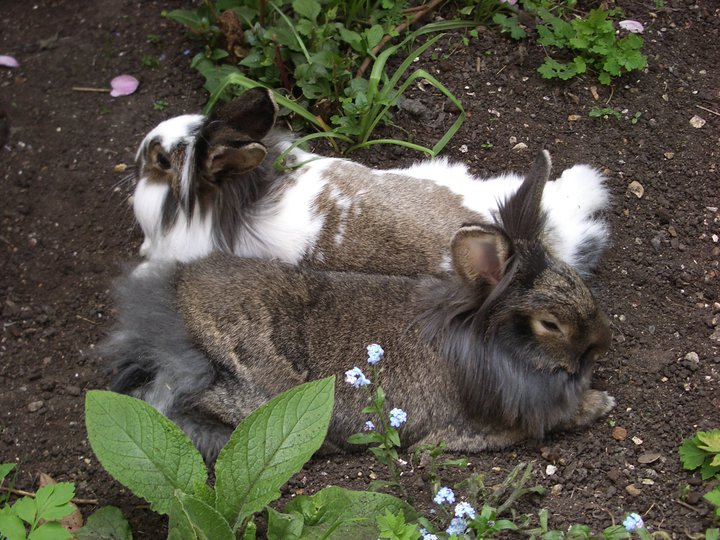 Bunny Friends Relax in the Cool Garden Dirt