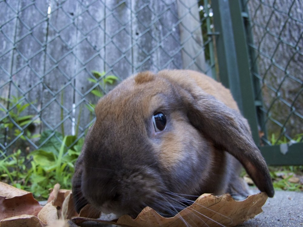 Botanist Bunny Is Trying to Study These Leaves