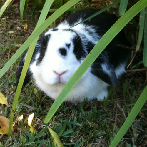Bunny Loves the Garden But Prefers the Shade