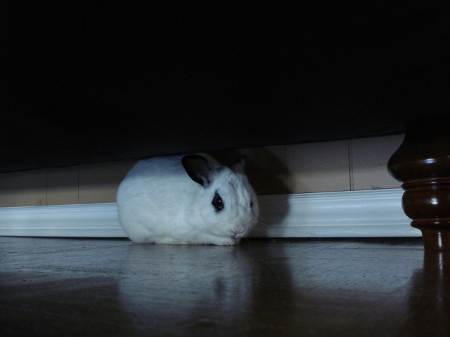 Aha! Bunny Has Been Caught in His Bunny Lair!