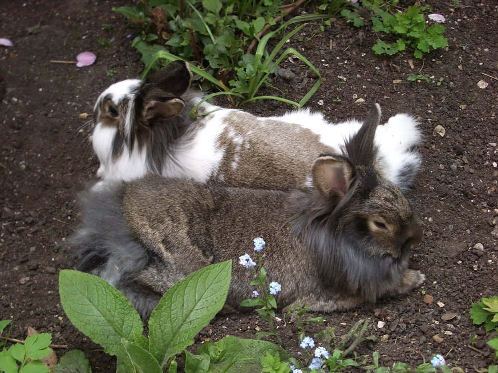 Bunnies Relax in the Cool Dirt After Their Jaunt through the Garden