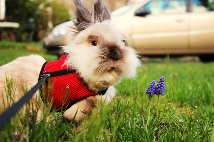 Botanist Bunny Gives You a Tour of the Yard and Its Plants