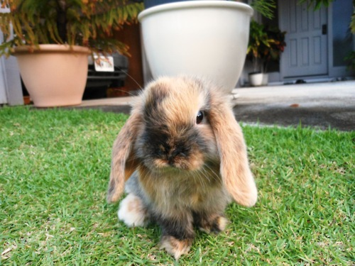 Little Bunny in a Big Yard