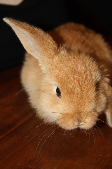 Helicopter Bun Keeps One Ear Up
