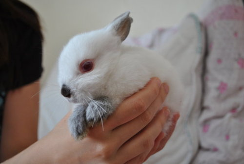 Little Bunny Rests Her Paws on Owner's Hand