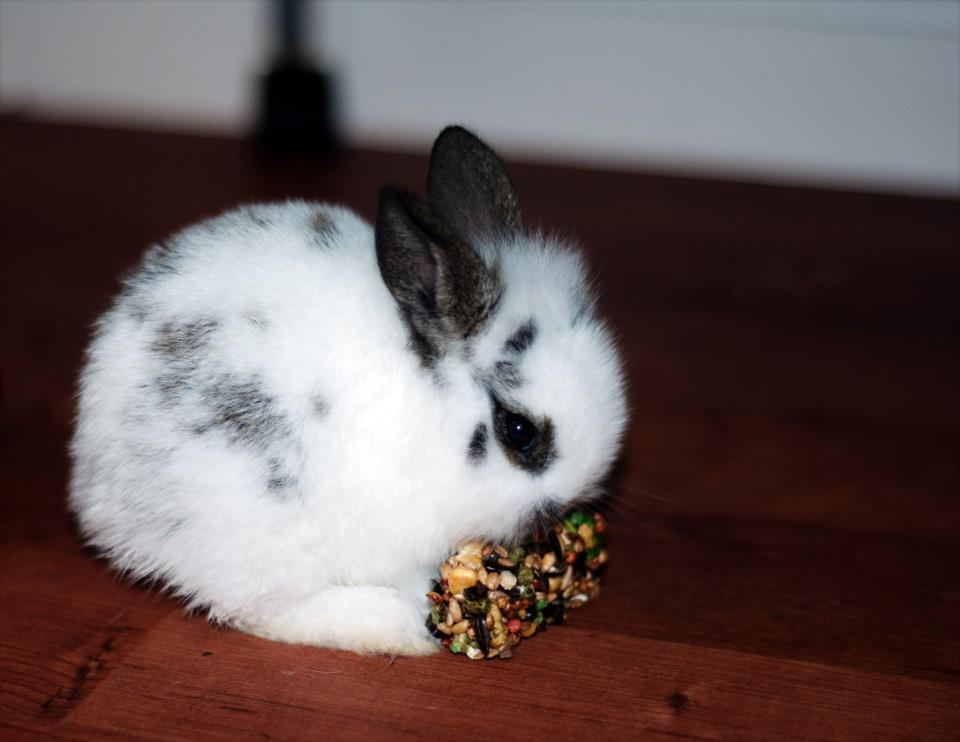 Bunny Nibbles on a Treat