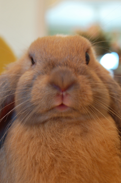 This Is What Bunny Disapproval Looks Like