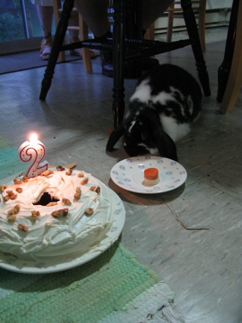 On Bunny's Birthday Hoomins Get One Cake and Bunny Gets Another