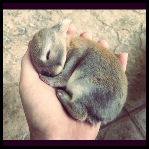 Baby Bunny is 10 Days Old