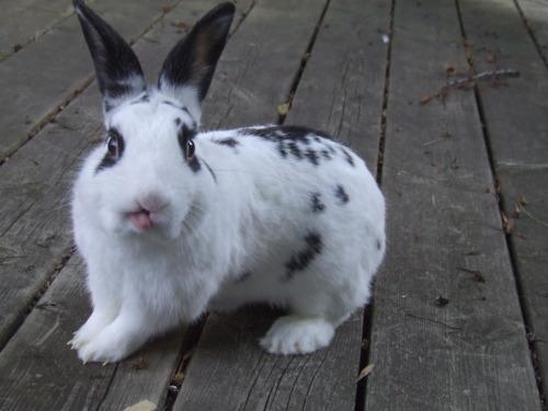 Bunny Makes a Funny Face