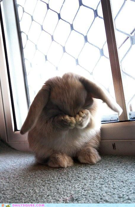 Bunny Closes His Eyes for Hide and Seek